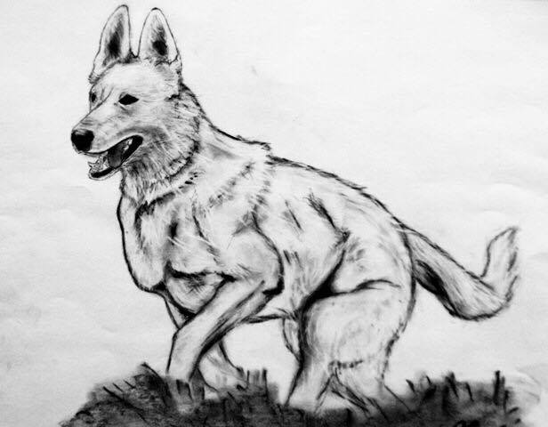 How to Draw a Dog Step by Step - Draw Dog Easy Tutorial