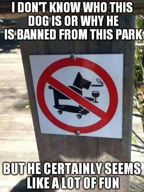 Funny Dog Meme I don't know who this dog is or why he is banned from this park, but he certainly seems like a lot of fun