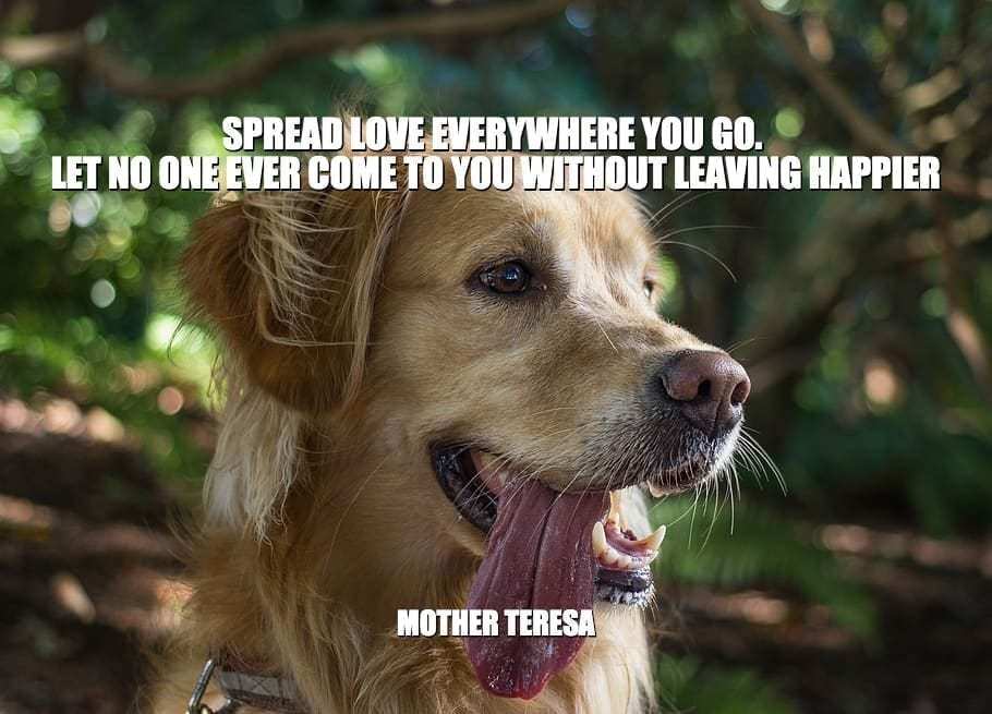 Daily Quotes: Spread Love Everywhere You Go. Let No One