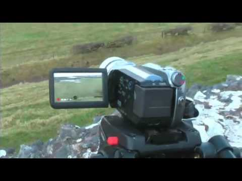 Viral Funny Video Extreme Sheep Led Art Video