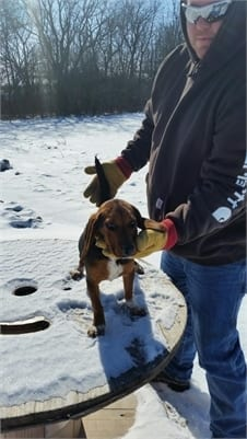 AKC Beagle Puppies for Sale in Illinois