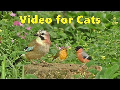 bird videos for cats birds for cats to watch 8 hours