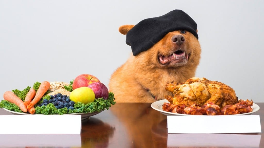 8 Steps How To Choose The Best Food For Your Dog